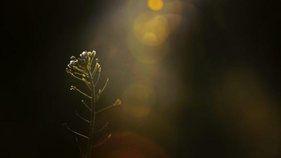 sunlight shining on a tender plant