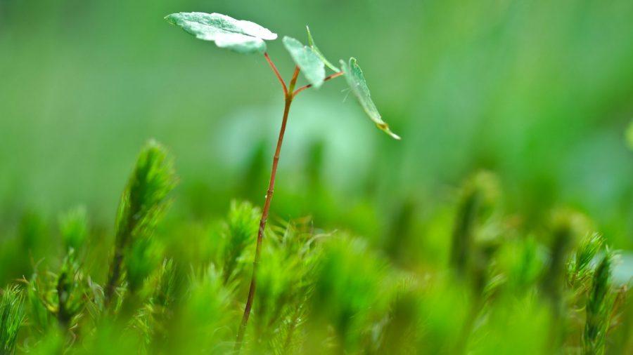 tiny tree sapling