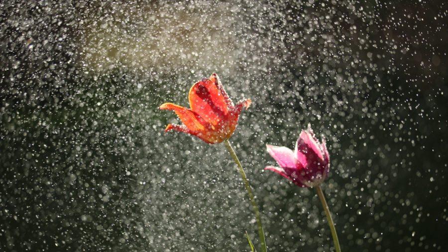 flowers in rain shower